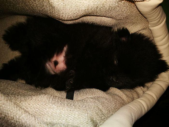 Dog Lover Dog Sleeping  Mon Amour❤️ Puppylove 😘😍🐶 Mama's Love Dogphoto Doglife One Animal Animal Themes