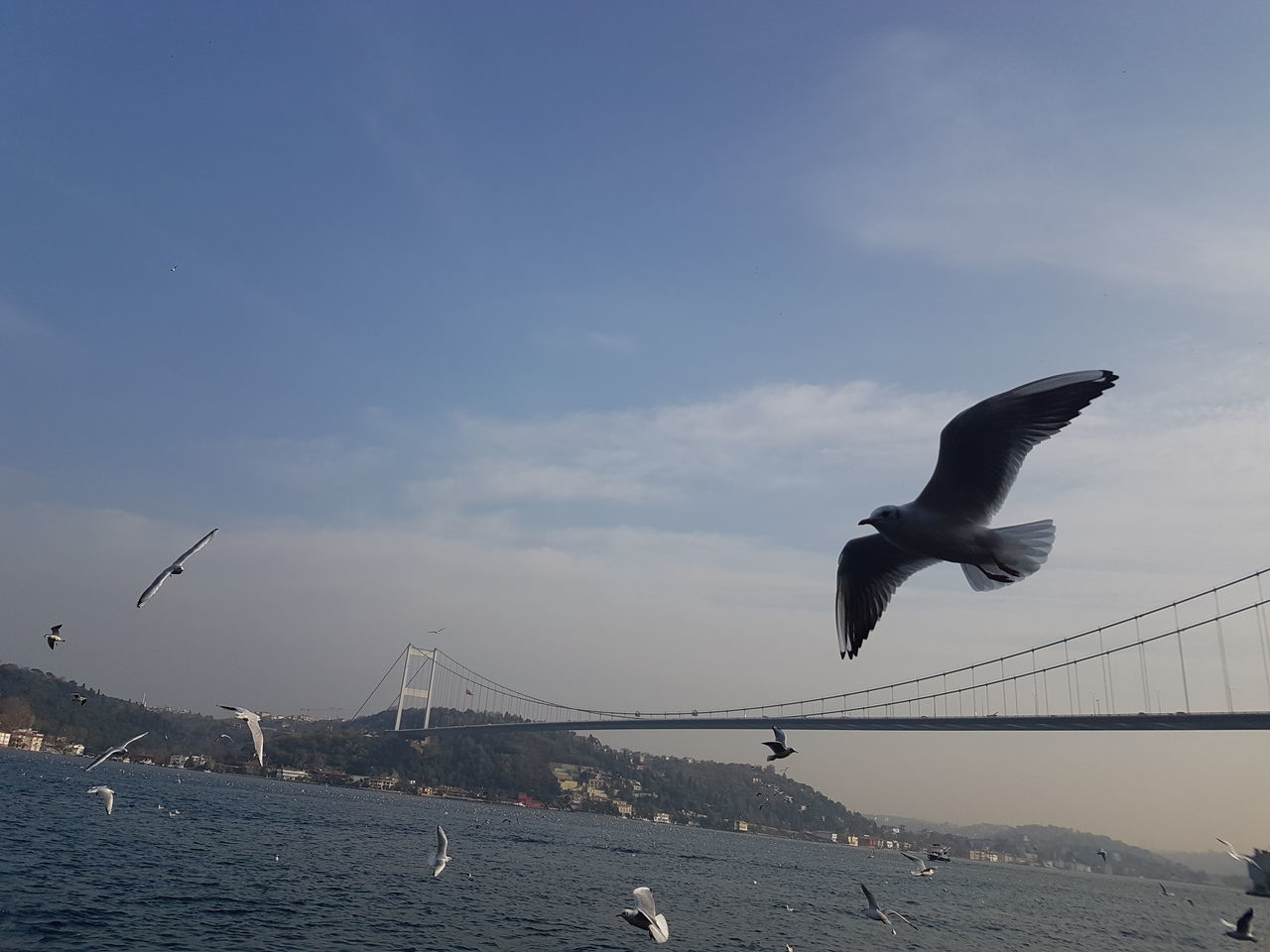 flying, bird, water, sea, animal themes, sky, animals in the wild, mid-air, spread wings, connection, bridge - man made structure, seagull, nature, outdoors, day, animal wildlife, suspension bridge, no people, horizon over water, architecture, beauty in nature, swan