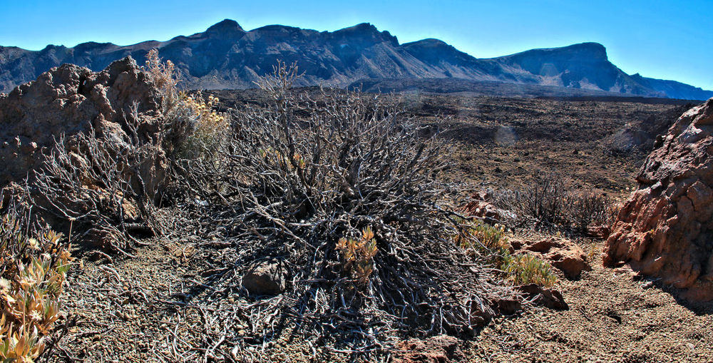 Arid Climate Beauty In Nature Canadas Del Teide Clear Sky Day Desert Dry Leaves Landscape Mountain Mountain Range Nature No People Outdoors Panorama Panoramic Photography Physical Geography Scenics Sky Tenerife Tranquility Travel Destinations