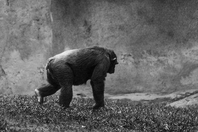 Struggle Blackandwhite Wildlife Nature Animals