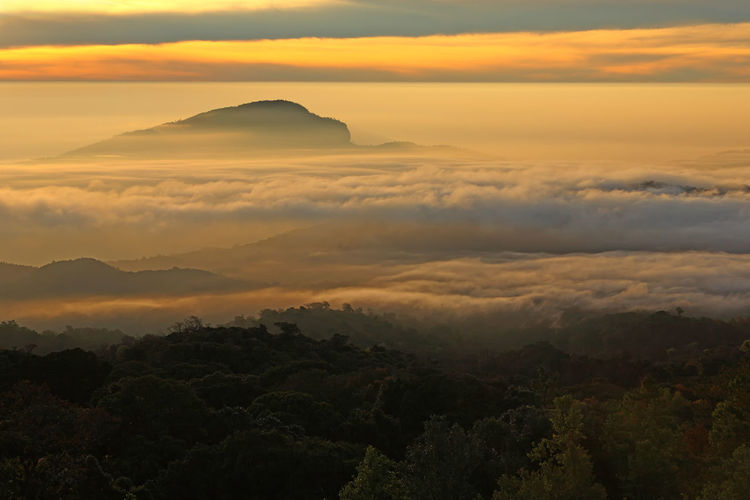 Beautiful golden light of Doi Inthanon National Park in winter season and mist the highest mountain in Thailand. Chiangmai Province, Northern of Thailand Sunset Sky Scenics - Nature Beauty In Nature Tranquil Scene Cloud - Sky Tranquility Orange Color Idyllic Nature No People Mountain Environment Landscape Non-urban Scene Outdoors Dramatic Sky Silhouette Mountain Range Remote Chiangmai Golden Doi Inthanon Panorama Autumn Mist Misty Morning Outdoor Yellow ASIA Asian