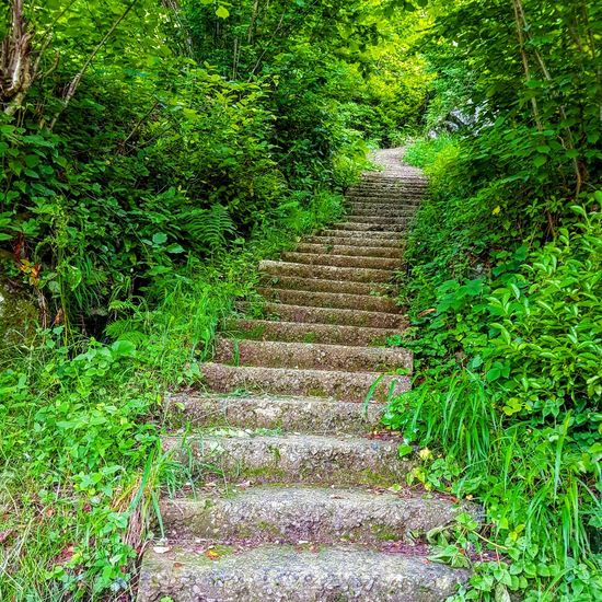 Stairs Beauty In Nature Full Frame High Angle View No People Backgrounds Tree Outdoors Day Green Color Nature Growth Grass