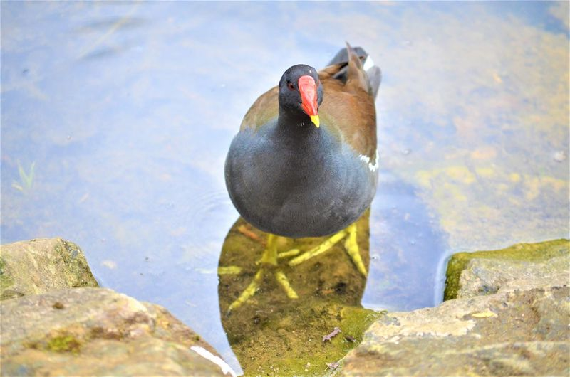 Water Animal Themes Animal Wildlife Animals In The Wild Bird Animal Lake Vertebrate Nature No People Day One Animal Rock Solid Rock - Object High Angle View Swimming Reflection Outdoors
