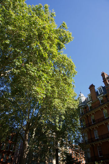 Low angle view of trees against buildings