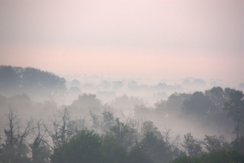 Scenic view of trees against sky at foggy weather