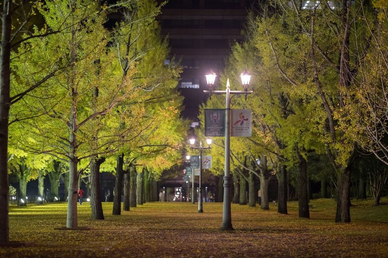 Leaf Beauty In Nature Night Autumn Japan Eye Em Nature Lover My Favorite Place