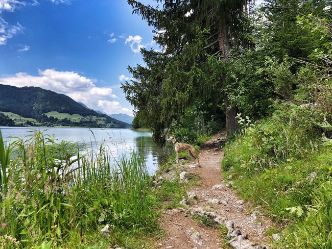 Weißensee Vacation With A Dog Vacation In The Countryside Visit Austria Water Plant Tree Sky Beauty In Nature Nature Tranquility Tranquil Scene Outdoors