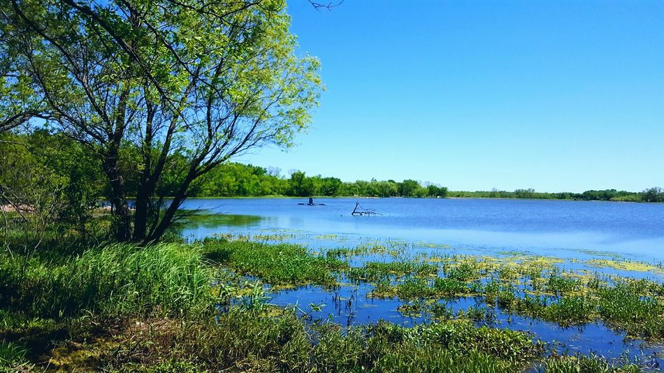 Spring day at McKinley lake. Treescollection Lakescape Sunshine Makes Everything Better Sunshine Through The Trees Blue Sky Green Nature