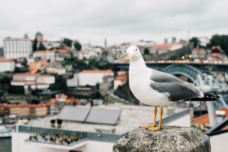 Seagull perching on retaining wall against cityscape