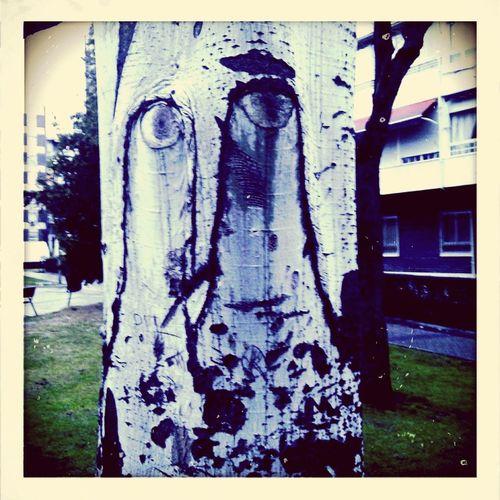 Say Hi To mister Tree! Tree Face Fairytale  Living Trees Beautiful Nature