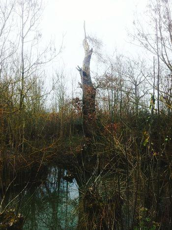 Maraispoitevin Maillezais Trees Collection