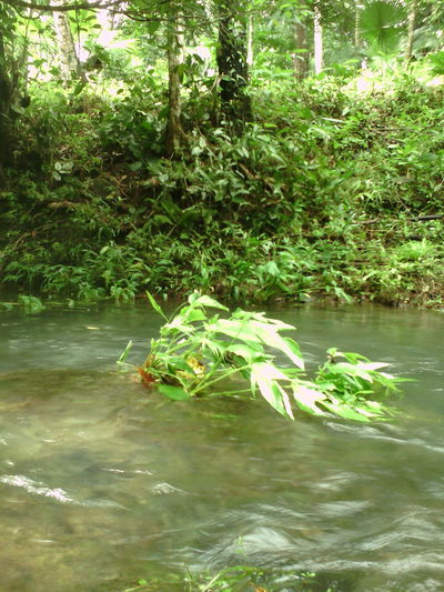 Water Tree Nature River Outdoors Reflection Day Forest No People Tranquility Growth Beauty In Nature Plant Outdoors, Outside, Open-air, Air, Fresh, Fresh Air, Naturelovers Nature_collection Philippines water