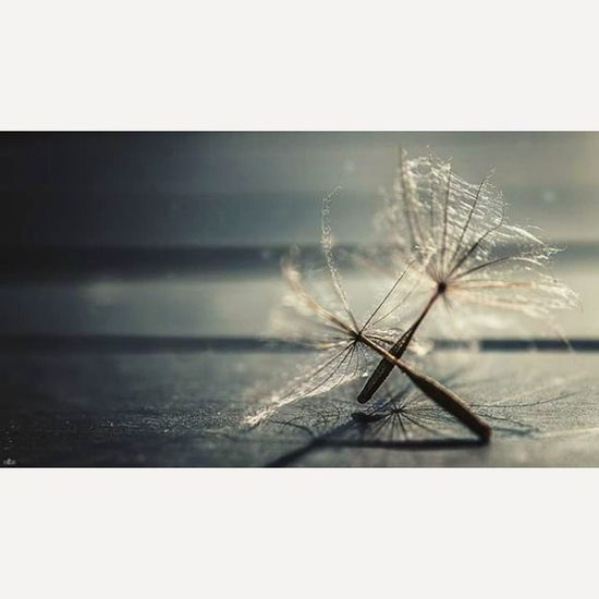 The little things in the World Makros Fotografie Photography Photographyislife Michaellangerfotografie