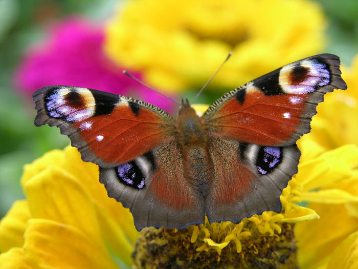 Animal Themes Animal Wildlife Animals In The Wild Beauty In Nature Butterfly - Insect Close-up Day Flower Flower Head Focus On Foreground Fragility Freshness Growth Insect Nature No People One Animal Outdoors Petal Plant Pollination Yellow