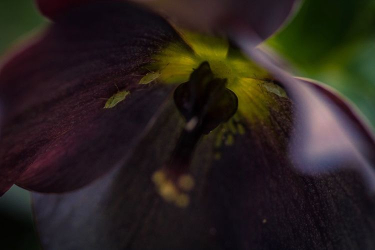 Floral beauty Flower Flowering Plant Close-up Plant Beauty In Nature Fragility Vulnerability  Flower Head Petal Freshness Growth Inflorescence Nature Focus On Foreground Outdoors Day Extreme Close-up One Person Pollen Purple