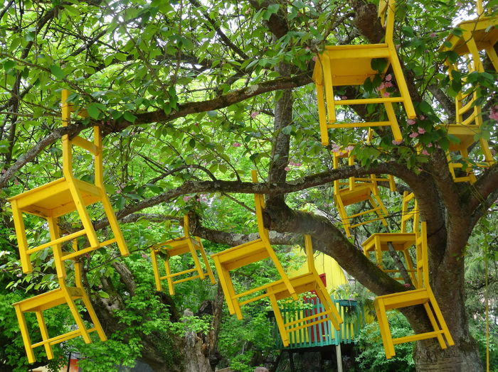 Le Moulin Jaune Printemps Promenade Arbre Art Art Contemporain Chaises Installation Nature Tree Yellow