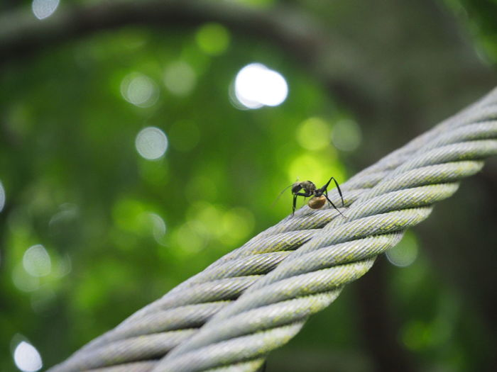 Close-Up Of Ant On Rope In Forest
