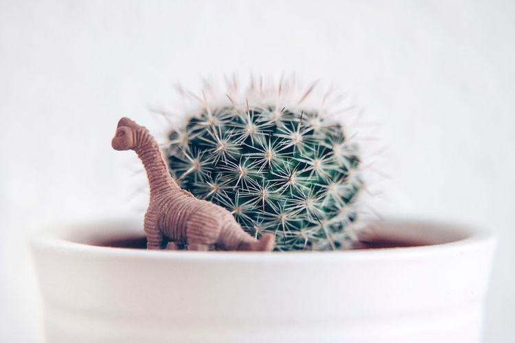 Close-up of toy in potted cactus