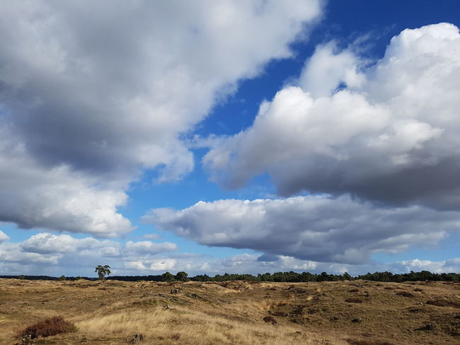 National Park Hoge Veluwe Blue Cloud - Sky Landscape Nature Outdoors Beauty In Nature Storm Cloud Day Clouds Tree Clouds And Sky Tranquility Betterlandscapes Sound Of Silence Let's Go Outside Colours Of Nature Landscape Photography Tranquil Scene Nature Forest Offroad Hiking No People Sky Dramatic Sky Hoge Veluwe