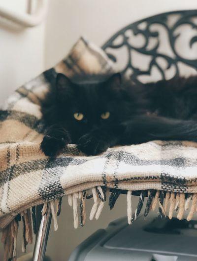 Cat paws Black