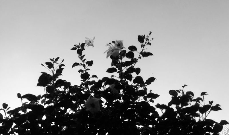 Leaf. Flowers. Sky, Black And White Exteriorphotography