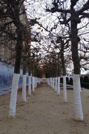 Montdesarts Brussels Bruxelles Tree Nature Beautiful Walking Autumn Autumn Trees IPhone 4S