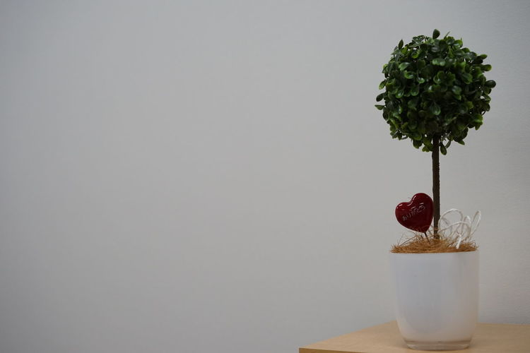 No People Tree Indoors  Day Nature Studio Shot Cultures Lifestyles Close-up Nature Table Home Interior Indoors  Plant