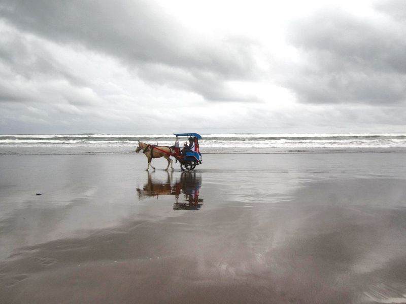 Adapted To The City People Horse Delman Cloud - Sky Environment Beach Taking Photos Scenics First Eyeem Photo Sea Sky Water Beauty In Nature Adults Only Parangtritisbeach Yogyakarta, Indonesia