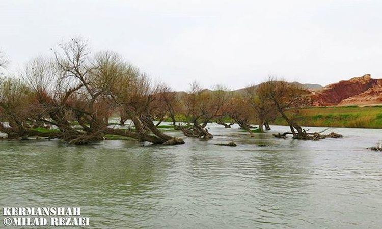 Gamasiab River in the West Village is Gamasyab,This river is one of the longest rivers in Iran's Kermanshah province and a hotbed of skinheads in the city of Hamedan province. _____________________________ رود گاماسیاب رودی است در دهستان گاماسیب واقع در غرب ایران که یکی از طویلترین رودخانههای ایران به شمار میرود. این رودخانه از چشمههای آهکی واقع در ۲۱ کیلومتری جنوب شرقی نهاوند واقع در غرب استان همدان، از دامنههای شمالی ارتفاعات گرین به نام سراب گاماسیاب سرچشمه میگیرد. گاماسیاب از گا (گاو) + ماسی (ماهی) + آب تشکیل شده، یعنی آبی که دارای گاوماهی (ماهی بزرگ) میباشد. گاماسیاب پس از دریافت سایر جریانات سطحی دیگر حوزههای مجاور نظیر آب ملایر، تویسرکان، اسدآباد به صحنه در شرق استان کرمانشاه وارد شده و در فرامان کرمانشاه به رود قرهسو میریزد. گاماسیاب پس از عبور از استان کرمانشاه وارد استان لرستان میگردد. گاماسیاب در طول شهرستان خرمآباد بنام سیمره نامیده میشود و تمام رودخانههای لرستان به آن میپیوندد و پس از گذشتن از لرستان در غرب خوزستان جاری و بنام کرخه نامیده میشود و بالاخره به تالاب هورالعظیم منتهی میگردد. _____________________________ ©Milad rezaei photography _____________________________ Kermanshah Bisotun Life Nature Natgeo Milad_rze Sky Love Iran Joy Fun Excitement World Cloud Beautiful Gamasiab Beach Sea Sky Sun Photo Photography Trees Clouds Image beauty Love excitement Mountain tree time love گاماسیاب
