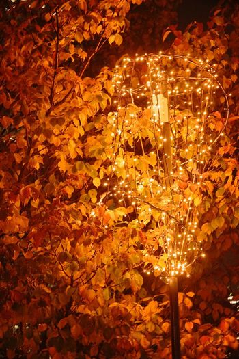 Amber Nights Amber Night 琥珀色 Nightphotography Night Lights City Lights Beauty In Nature Hugging A Tree The Purist (no Edit, No Filter) EyeEm Nature Lover EyeEm Best Shots - Nature EyeEm Best Shots - Night Photography EyeEm Best Shots Snapshot Taking Photos Walking Around お写ん歩