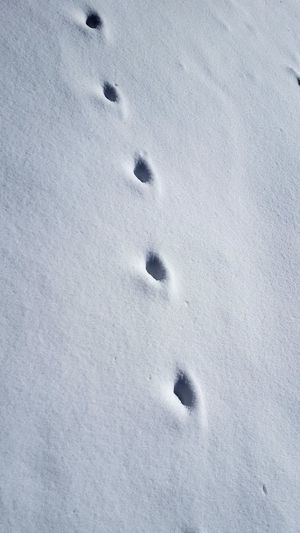 animal tracks Animal Track Footprints Cold Temperature Snow Winter No People Ice Frozen Day Outdoors