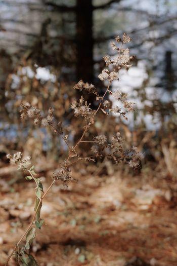 Dry plant Canon