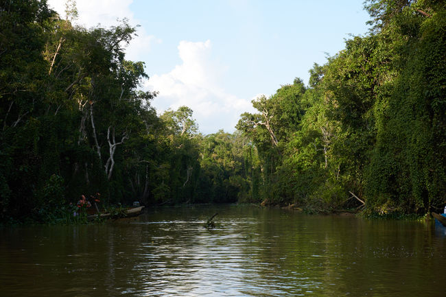 Beauty In Nature By Boat Day Forest Growth Jungle Jungle River Nature No People Outdoors Sky Tree Water