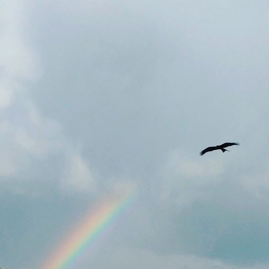 Eagle Rainbow Weather Blue Sky