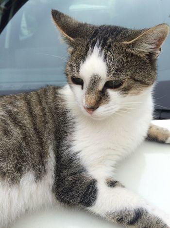 Kitty Sleeps On A Car Soft Kitty Warm Kitty Little Ball Of Fur, Happy Kitty Sleepy Kitty Pur Pur Pur