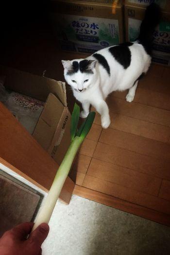 「ネギ食うか?」「いらんよ」 Cat 葱
