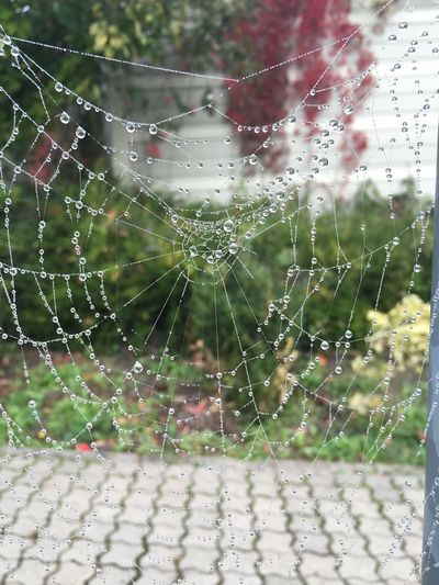 …quite fascinated by these spider webs! 2/4 — Captured them early yesterday morning near Dortelweil! Spider Web Spinnennetz