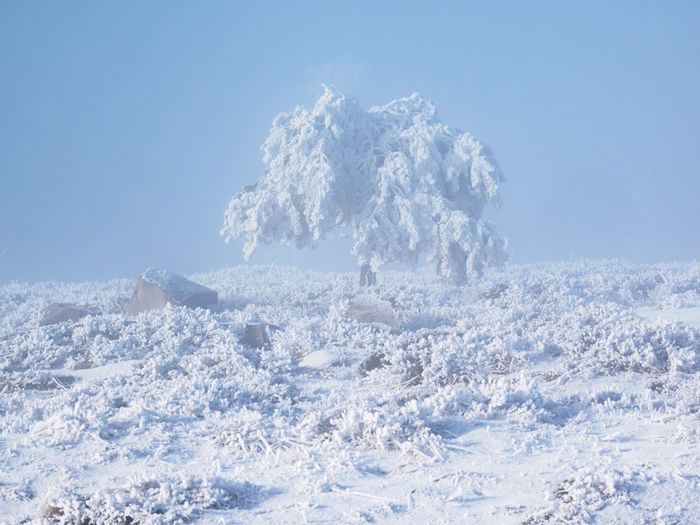 Snowcapped landscape against clear blue sky