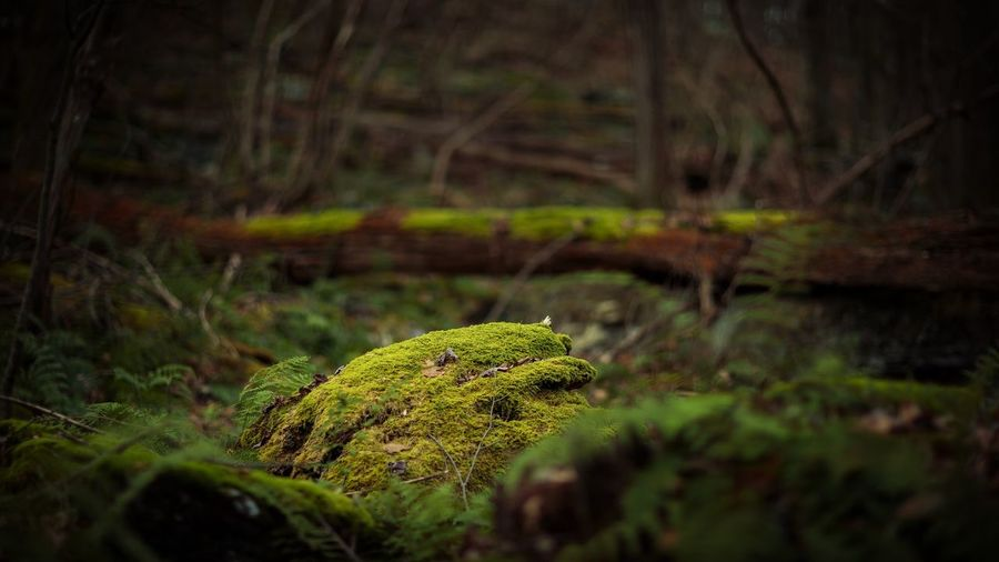 Close-up of moss on rock in forest