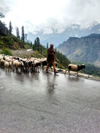 just captured this moment during a family trip to leh, india Trekking Sheperd Sheep Rain Mountain Life Capture The Moment Indian Culture  Himalayas Mountains Rohtang Pass, Manali