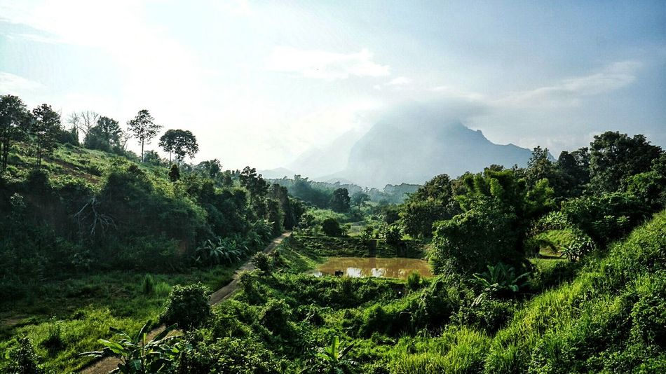 Tree Tranquil Scene Landscape Scenics Tranquility Growth Agriculture Farm Mountain Beauty In Nature Rural Scene Sky Travel Destinations Field Green Color Nature Cloud - Sky Plant Non-urban Scene Crop  Chiang Dao Doi Luang The Great Outdoors - 2017 EyeEm Awards