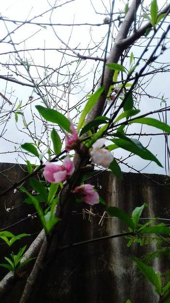 Plant Nature Inspiration Plants Mexico Flowers árbol Matamoros Tamaultimas Flores
