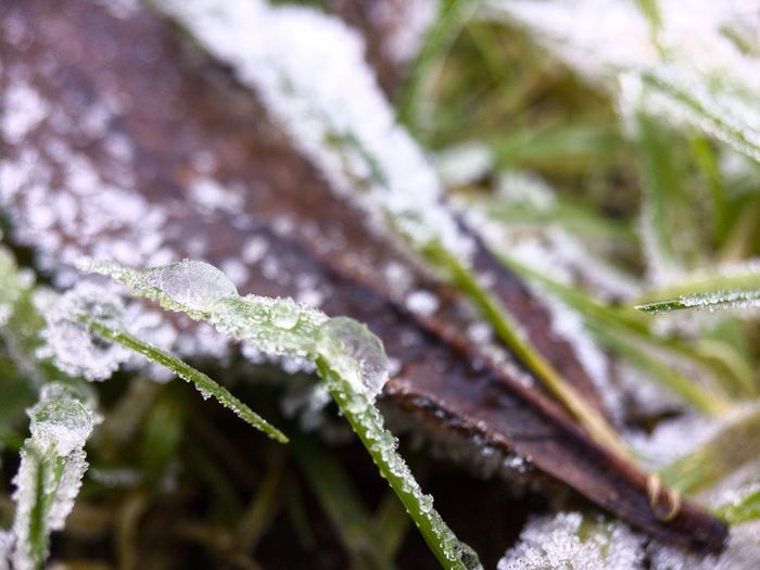 Frost in the