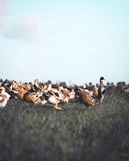 View of birds on field against sky