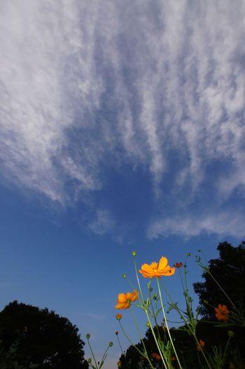 Sky_collection,cloudporn,skyporn EyeEm Nature Lover Nature_collection Flowers,flowerporn