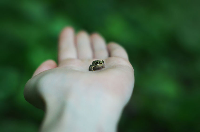 Frog Body Part Close-up Day Diamond - Gemstone Finger Focus On Foreground Hand Holding Human Body Part Human Finger Human Hand Jewelry Nature Of Russia Natureofrussia One Animal One Person Outdoors Personal Accessory Ring Selective Focus Small Small Frog 10 The Great Outdoors - 2018 EyeEm Awards The Street Photographer - 2018 EyeEm Awards
