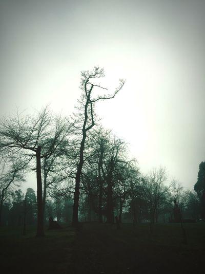 Trees Portadown Winter Dusk