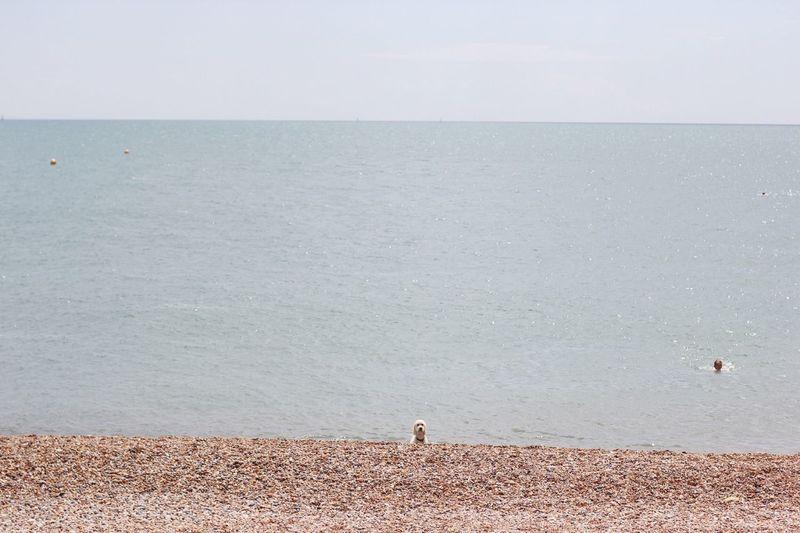 View Of Dog At Seashore