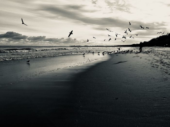 Autumn on Baltic beach in Sopot, Poland Flock Of Birds Beach Sea Seagull Sea Bird First Eyeem Photo