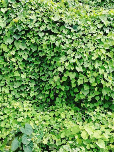 Greenworld Leaf Full Frame Backgrounds Close-up Green Color